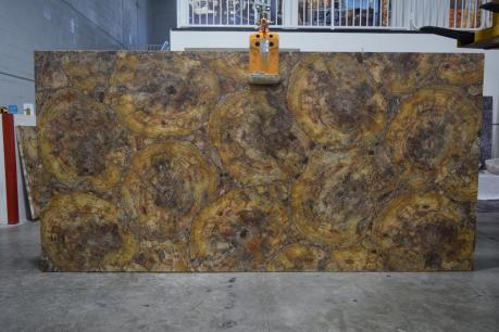 Brown Petrified Wood Brushed